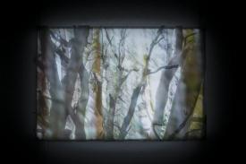 Treespirits I