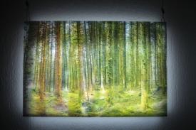 Treespirits II